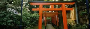 Torii Gates in a Park, Ueno Park, Taito, Tokyo Prefecture, Kanto Region, Japan