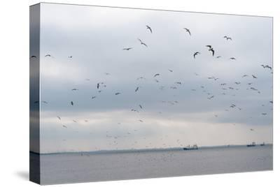 Gulls Flying over the Sea