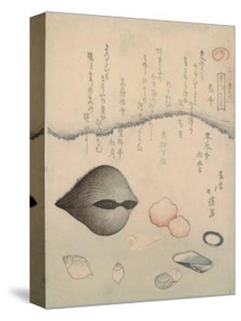 Aragai, Masu?gai, Anagai: Clams by Totoya Hokkei