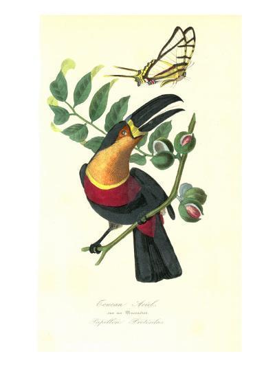 Toucan on Nutmeg-Porter Design-Premium Giclee Print