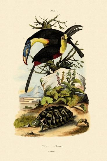 Toucans, 1833-39--Giclee Print