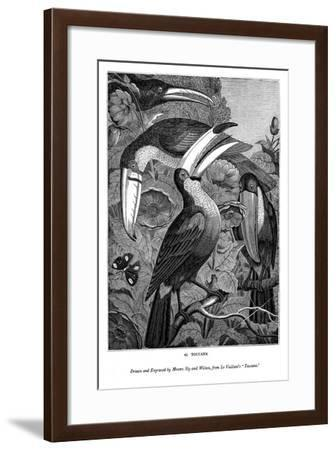 Toucans, C1770-1820- Messrs Sly and Wilson-Framed Giclee Print