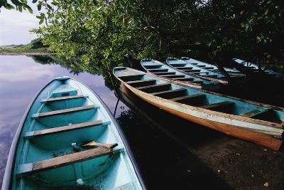 Tour Boats Moored in Ventanilla Lagoon-Danny Lehman-Photographic Print