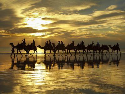 Tourist Camel Train on Cable Beach at Sunset, Broome, Kimberley Region, Western Australia-David Wall-Photographic Print