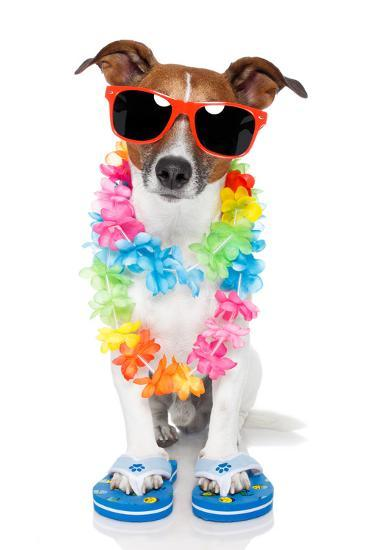 Tourist Dog With Hawaiian Lei And Shades-Javier Brosch-Photographic Print
