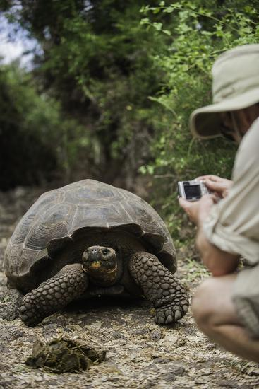 Tourist Photographing a Captive Galapagos Tortoise at the Charles Darwin Research Station-Jad Davenport-Photographic Print
