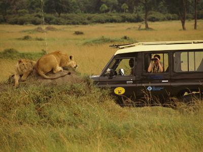 Tourist Views Lions from a Safari Jeep-Richard Nowitz-Photographic Print
