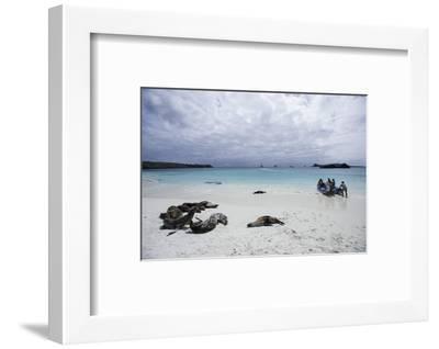 Tourists and Curious Galapagos Sea Lions Mingle on the Beach-Jad Davenport-Framed Photographic Print