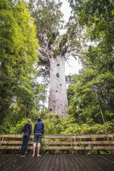 Tourists at Tane Mahuta (Lord of the Forest), the Largest Kauri Tree in New Zealand-Matthew Williams-Ellis-Photographic Print