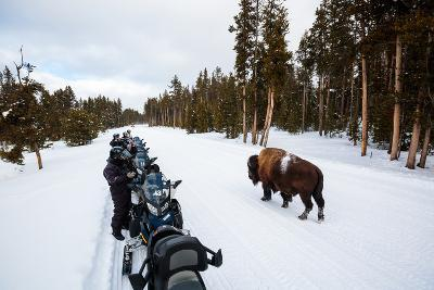 Tourists On A Snowmobile Tour In Yellowstone NP Take Smart Phone Photos If A Nearby Bison-Ben Herndon-Photographic Print