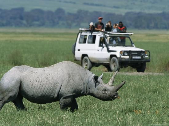 Tourists View a Rhinoceros from a Safari Jeep-Richard Nowitz-Photographic Print