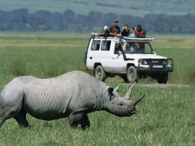 https://imgc.artprintimages.com/img/print/tourists-view-a-rhinoceros-from-a-safari-jeep_u-l-p4mwc70.jpg?p=0