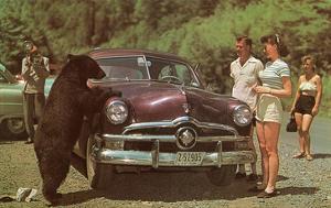 Tourists Watching Black Bear