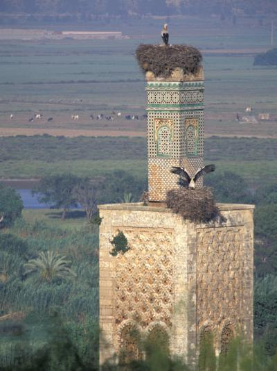 Tower With Birds and Bird Nests, Morocco-John & Lisa Merrill-Photographic Print