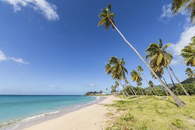 Towering Coconut Palms Stretching Towards the Caribbean Sea Near Carlisle Bay. Antigua-Roberto Moiola-Photographic Print