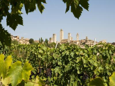 Towers of San Gimignano with Grapevines Producing Vernaccia Di San Gimignano Wine in Foreground-Olivier Cirendini-Photographic Print