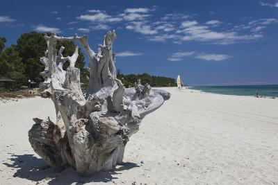 Town Beach Driftwood, Ghisonaccia, Costa Derena, Corsica, France-Walter Bibikow-Photographic Print