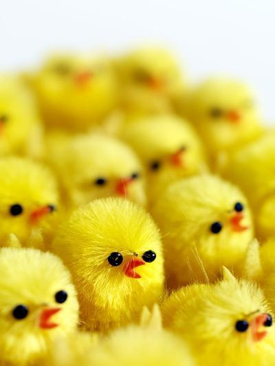Toy Chicks-Tek Image-Photographic Print