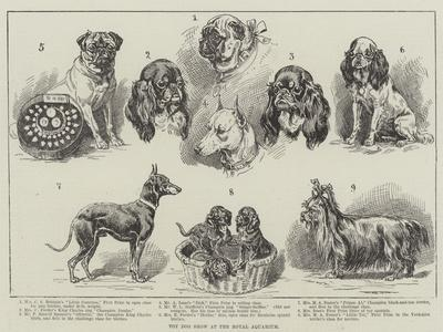 https://imgc.artprintimages.com/img/print/toy-dog-show-at-the-royal-aquarium_u-l-pw0bkw0.jpg?p=0