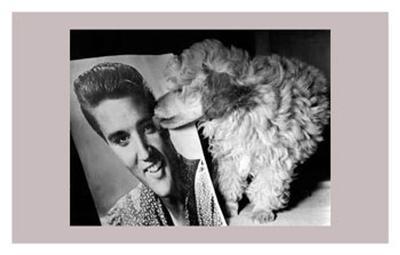 Toy Poodle Kisses Elvis--Art Print