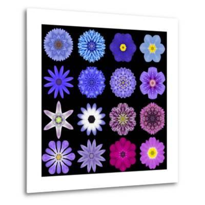 Big Collection of Various Blue Pattern Flowers