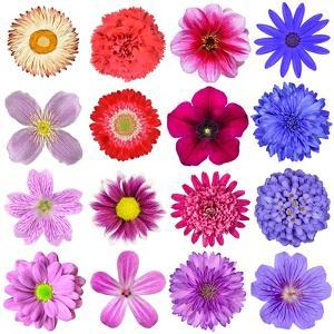 Big Selection Of Colorful Flowers Isolated On White Background by tr3gi