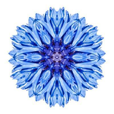 Blue Cornflower Mandala Flower Kaleidoscope