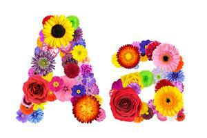 Flower Alphabet Isolated On White - Letter A by tr3gi
