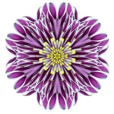 Kaleidoscopic Chrystanthemum Flower Mandala