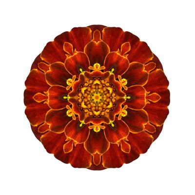 Red Concentric Marigold Mandala Flower