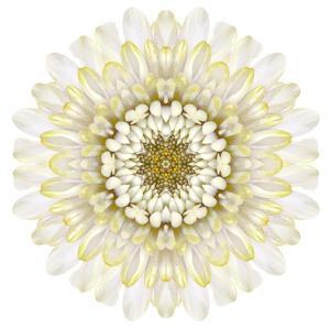 White Chrysathemum Mandala Flower Kaleidoscopic by tr3gi