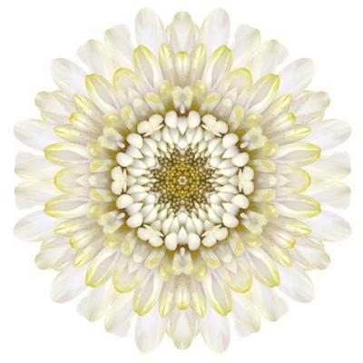 White Chrysathemum Mandala Flower Kaleidoscopic