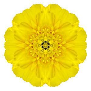 Yellow Concentric Marigold Mandala Flower by tr3gi