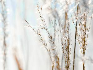 Blue Grasses by Tracey Telik