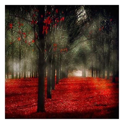 Crimson 12