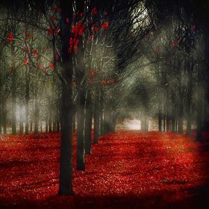 Crimson 12 by Tracey Telik