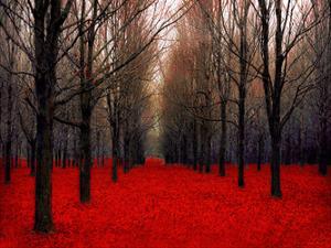 Fairy Tale Autumn by Tracey Telik