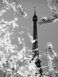 Spring Eiffel BW by Tracey Telik