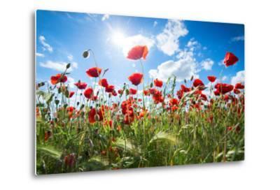 A Large Field of Poppies Near Newark in Nottinghamshire, England Uk