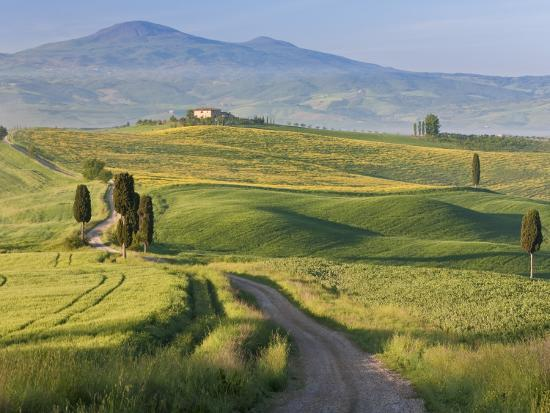 Track, San Quirico D'Orcia, Val D'Orcia, Tuscany, Italy-Peter Adams-Photographic Print