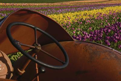Tractor at the Tulip Festival, Woodburn, Oregon, USA-Michel Hersen-Photographic Print
