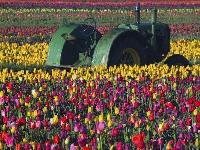 Tractor in the Tulip Field, Tulip Festival, Woodburn, Oregon, USA-Michel Hersen-Photographic Print