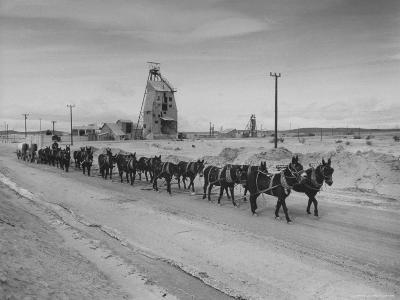 Trademark Twenty Mule Team of the US Borax Co. Pulling Wagon Loaded with Borax-Ralph Crane-Photographic Print