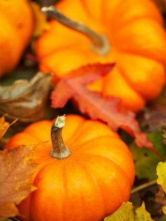 https://imgc.artprintimages.com/img/print/traditional-autumnal-scene-of-small-pumpkins-and-fall-leaves_u-l-q10xap90.jpg?p=0
