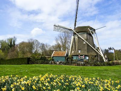 Traditional Dutch Windmill with Daffodils Field Nearby, the Netherlands-Tetyanka-Photographic Print