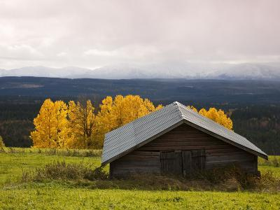 Traditional Wooden Barn, Yellow Aspens and Fjells with First Snow in Autumn-Christer Fredriksson-Photographic Print