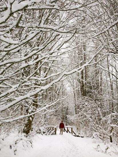 Trail and Hiker in Winter, Tiger Mountain State Forest, Washington, USA-Jamie & Judy Wild-Photographic Print