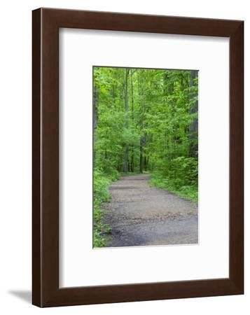Trail at Ferne Clyffe State Park, Johnson County, Illinois-Richard & Susan Day-Framed Photographic Print