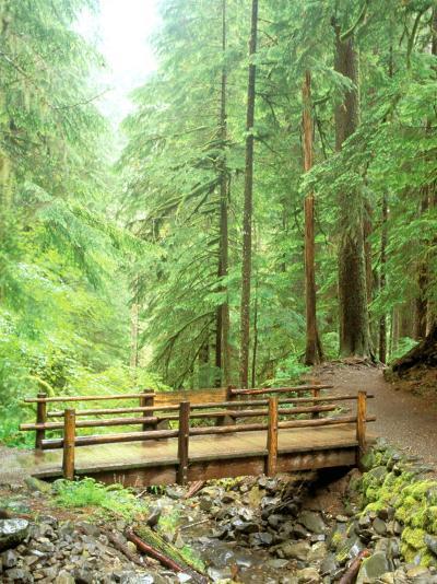 Trail Bridge, Upper Sol Duc Valley, Olympic National Park, Washington, USA--Photographic Print
