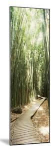 Trail in a Bamboo Forest, Hana Coast, Maui, Hawaii, USA